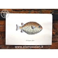 pesci LPESC26