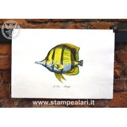 pesci LPESC24