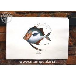 pesci LPESC23