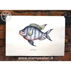 pesci LPESC22