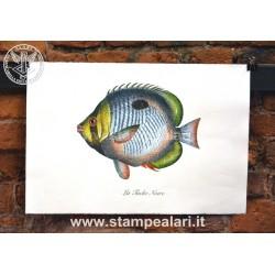 pesci LPESC21