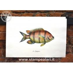 pesci LPESC20