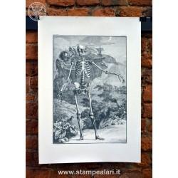 scheletro LANATC9
