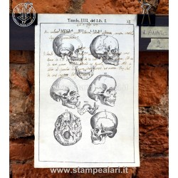 [:it]LANATC2 - Teschi e denti[:en]LANATC2 - Skulls and teeth[:]